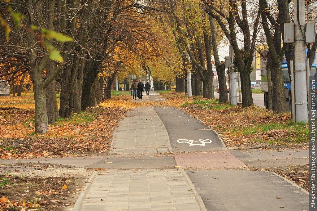 Стежка з деревами на узбіччі дороги