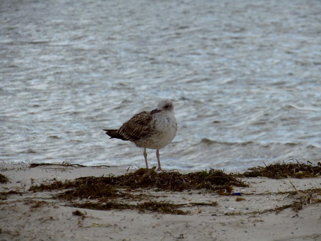 Птах стоїть на пляжі біля тіла води