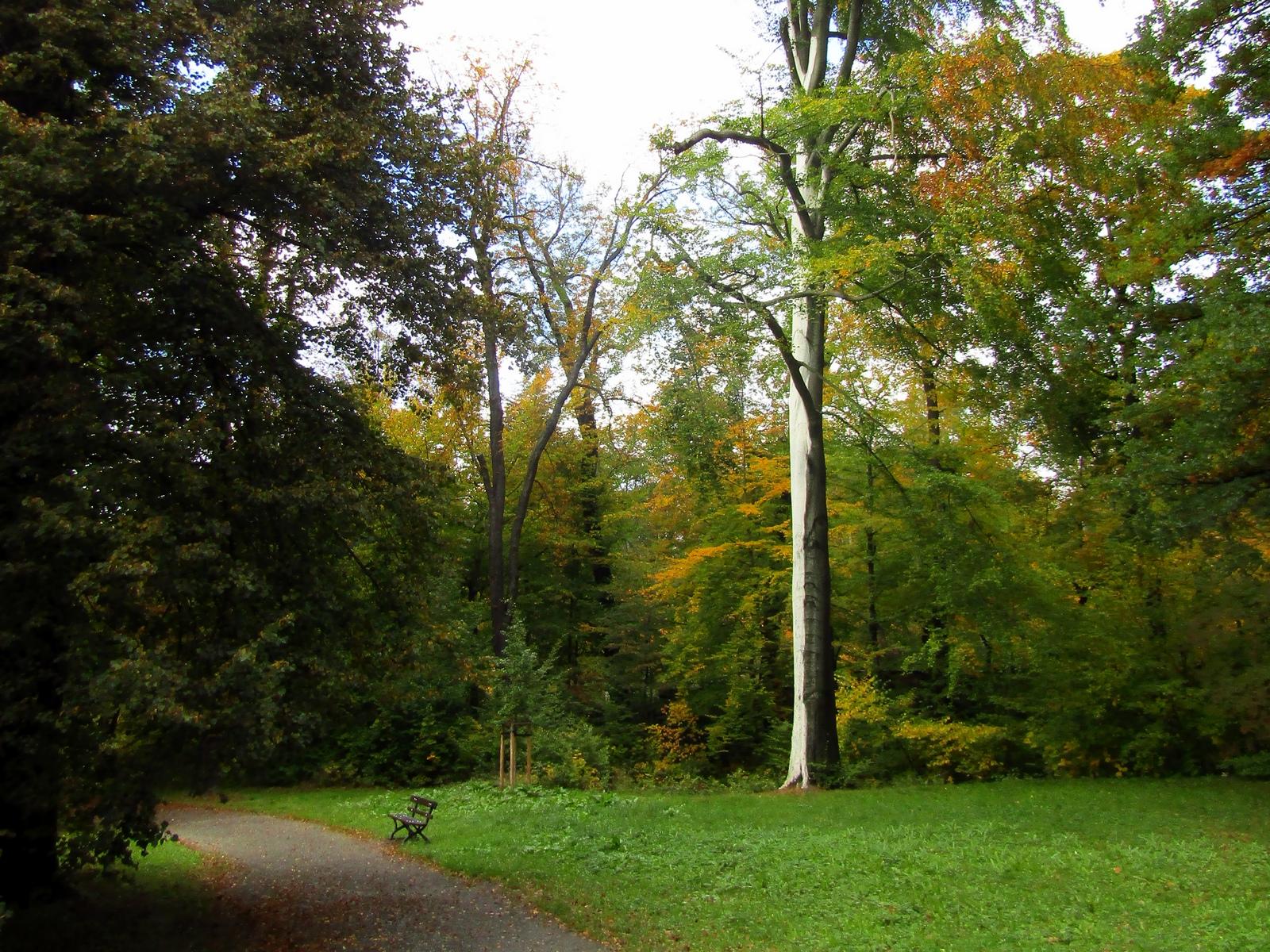Дерево у парку