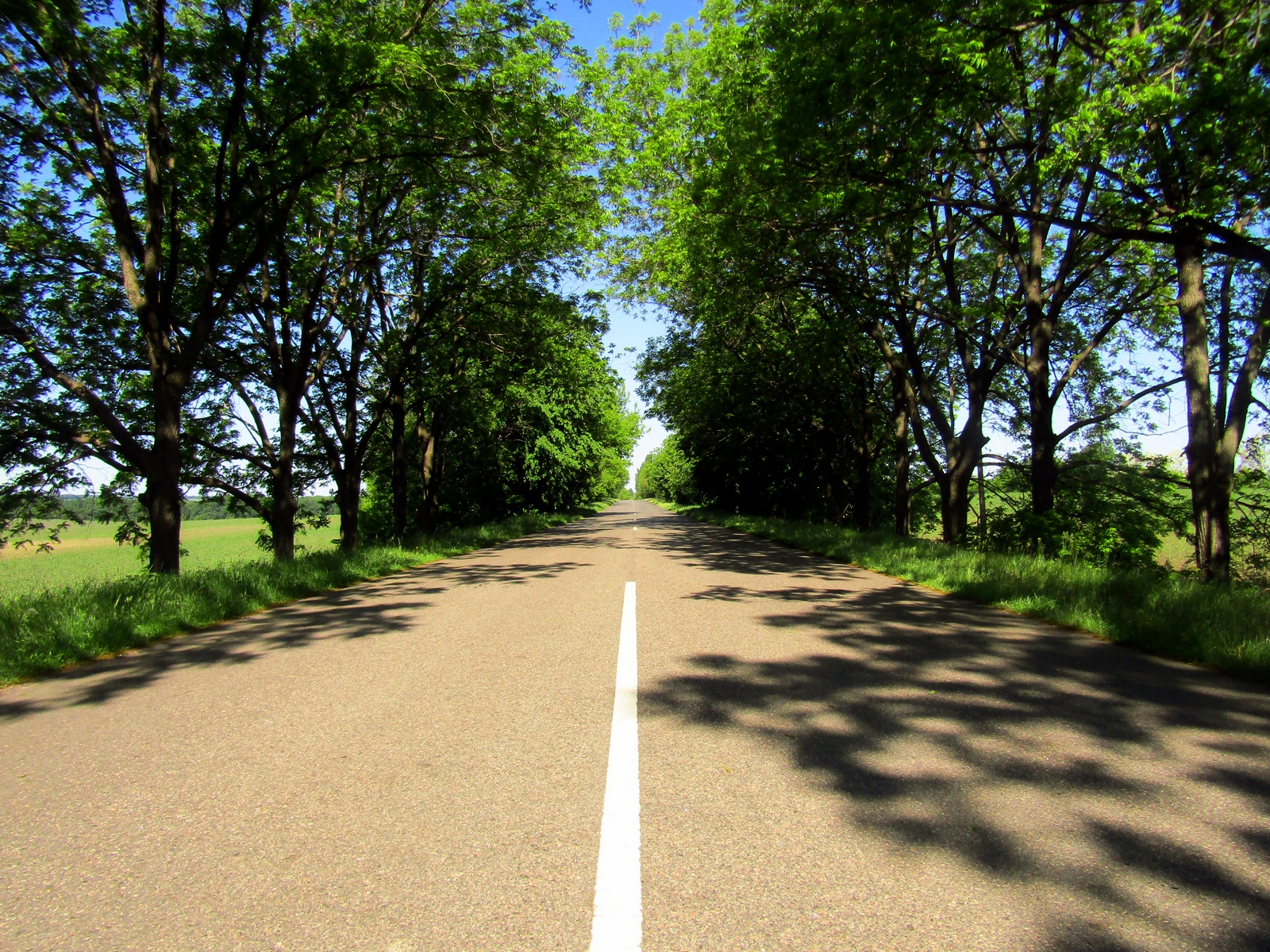 Дорога Чигирин—Суботів