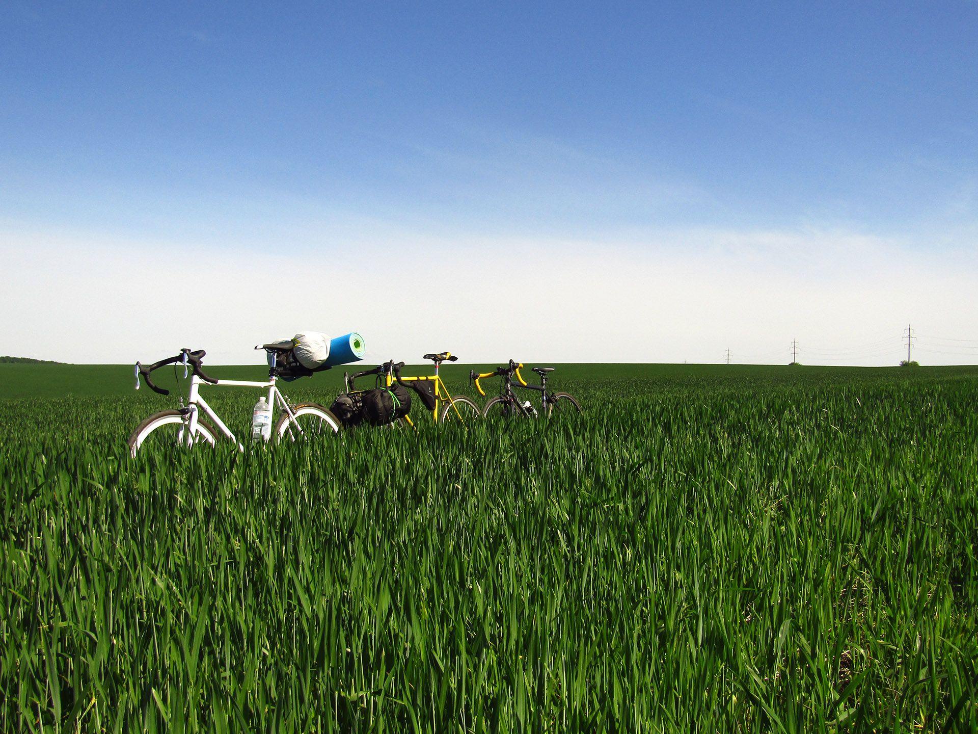 Велосипеди в траві