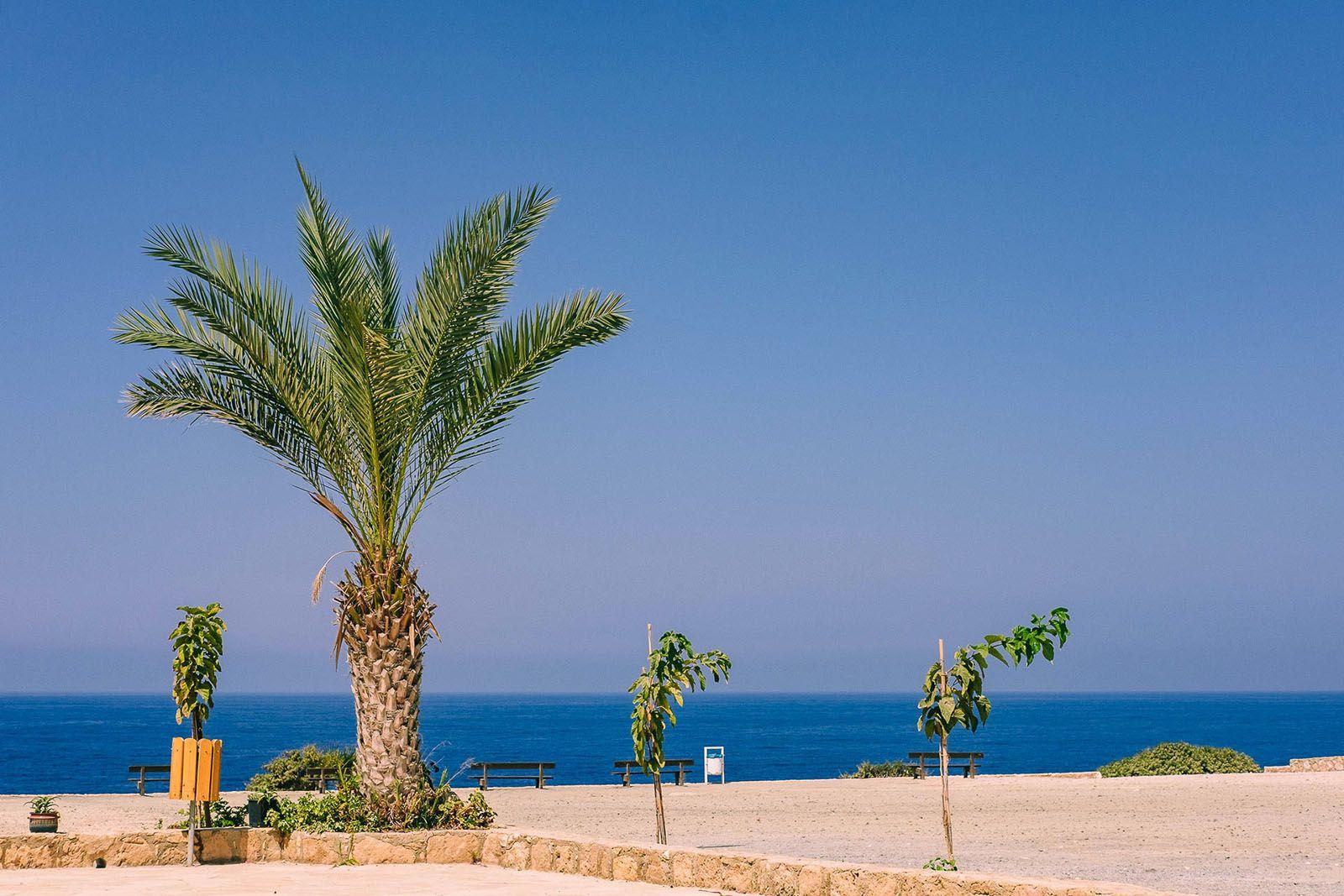 Група пальм на пляжі