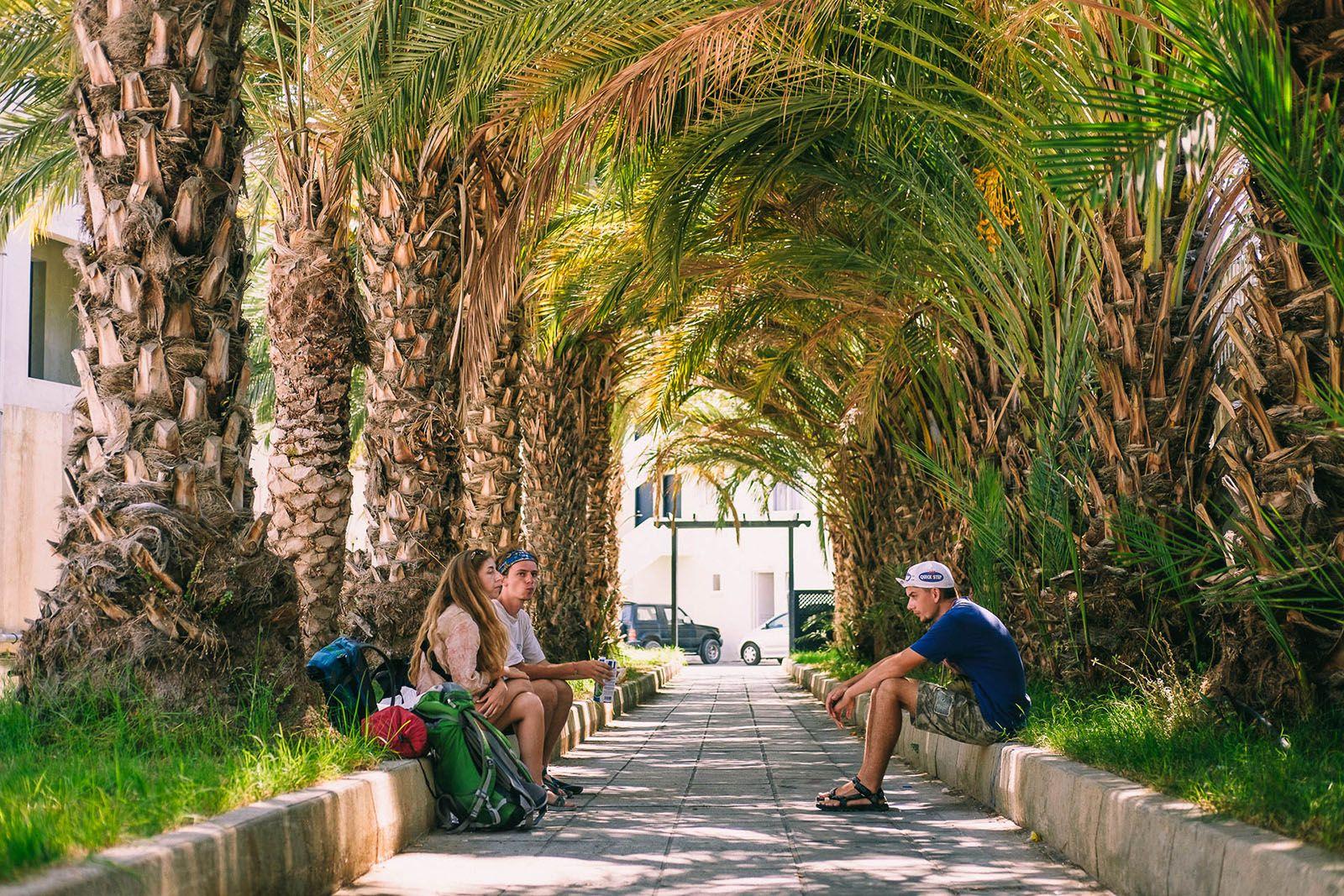 Пальмова алея в Пафосі
