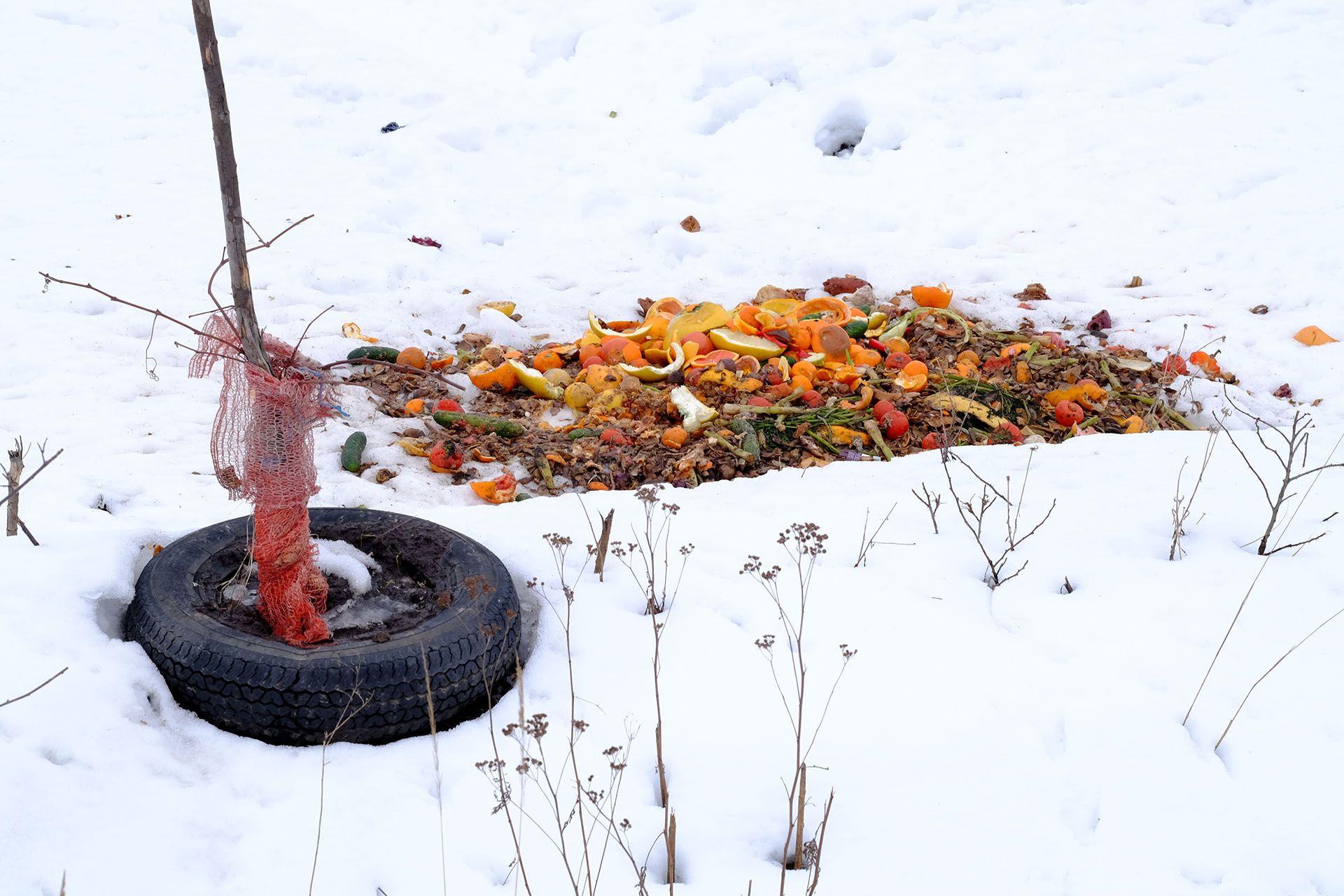 Крупним планом дерева, покритого снігом