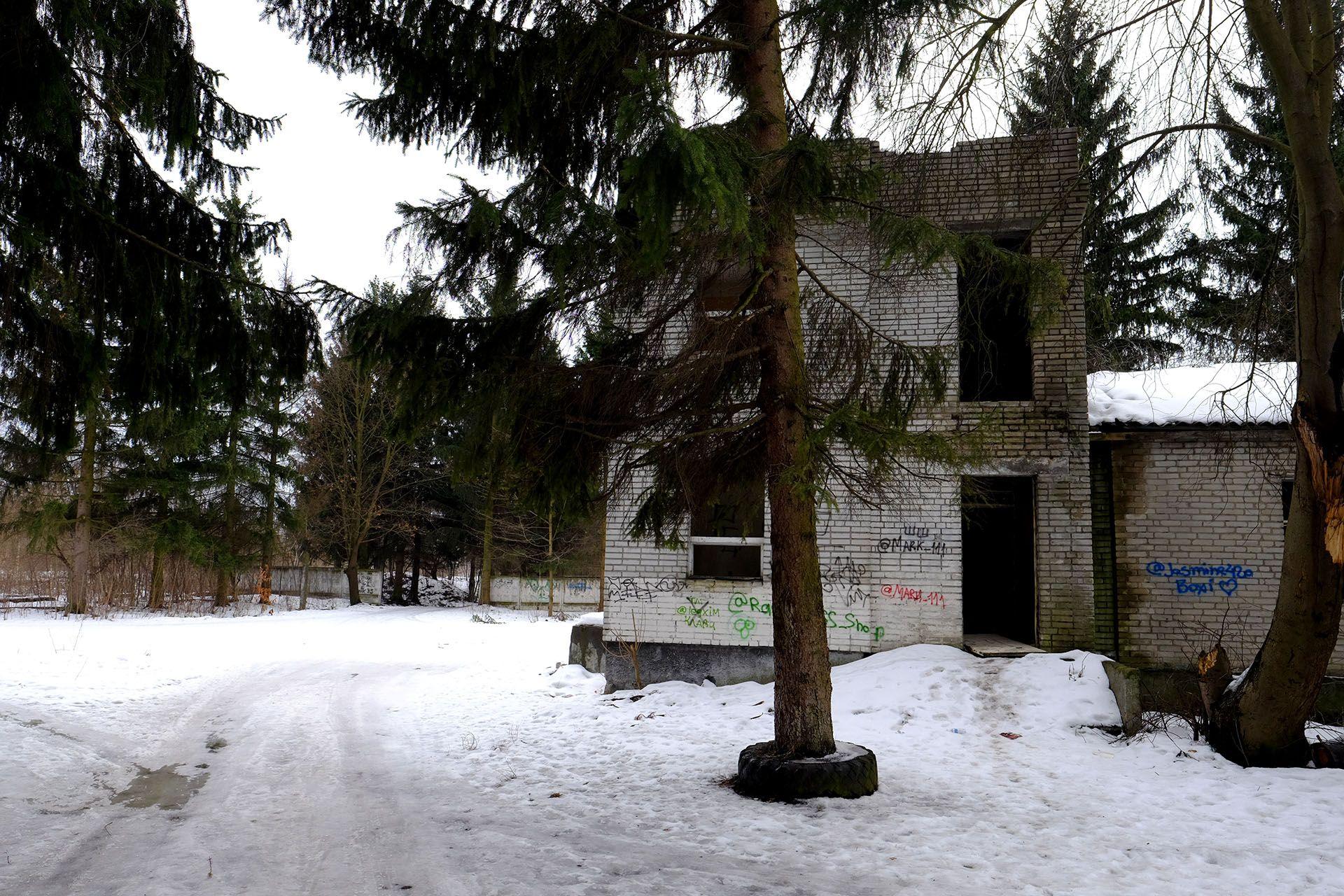 Дерево, вкрите снігом
