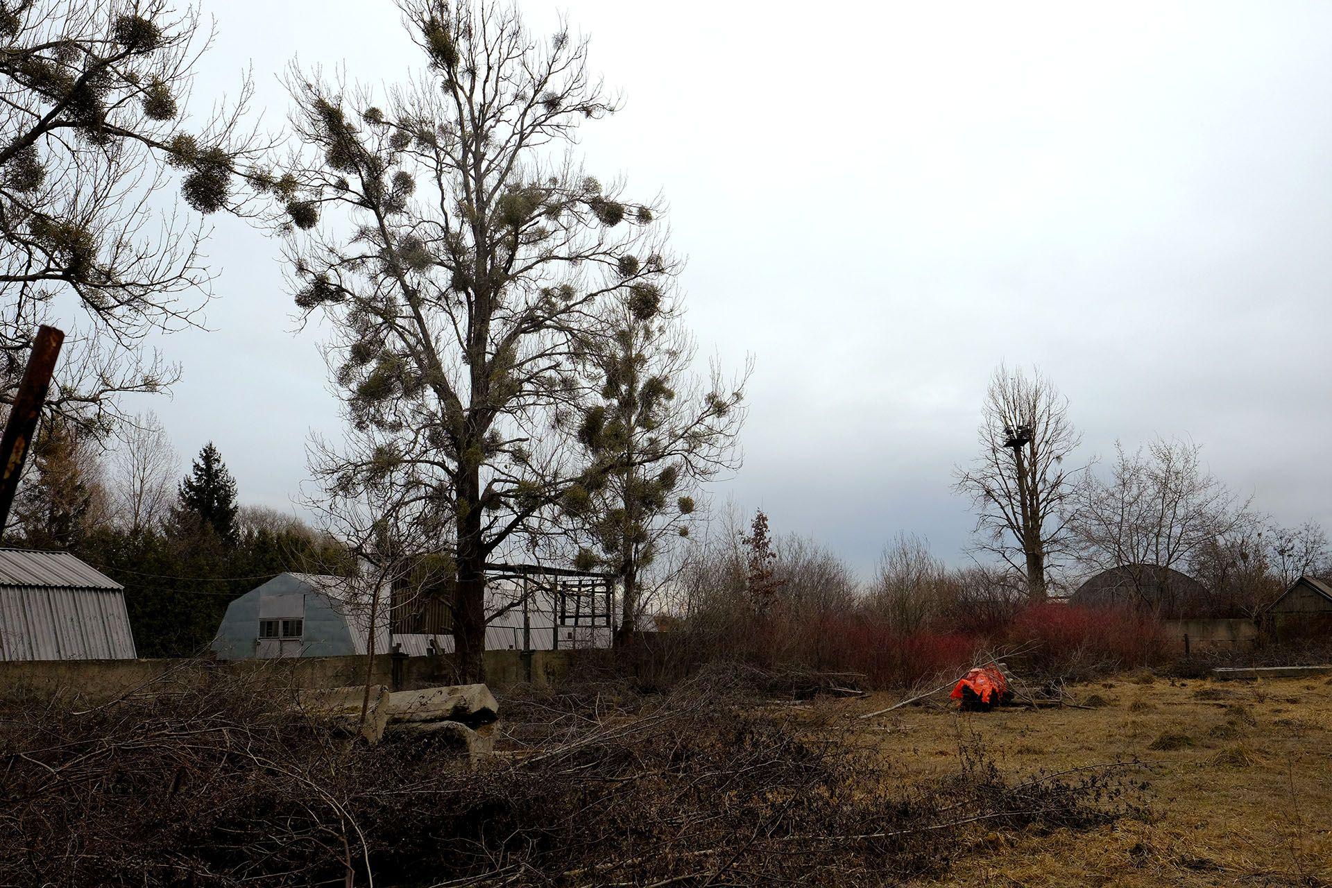 Дерево посеред поля