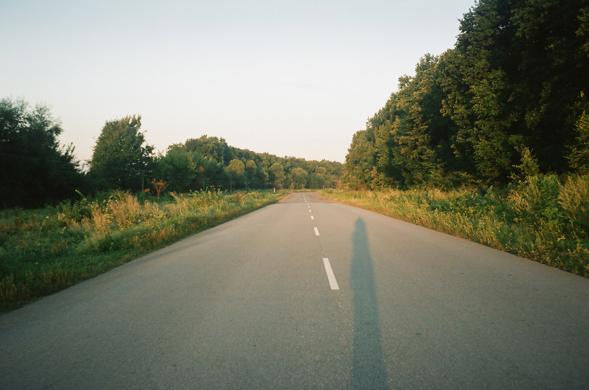 Шлях з деревами на стороні дороги